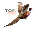 Creekside Pheasant Top