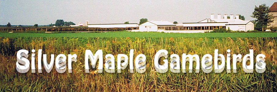 Welcome to Silver Maple Gamebirds - Breeder of Bob White Quail and
